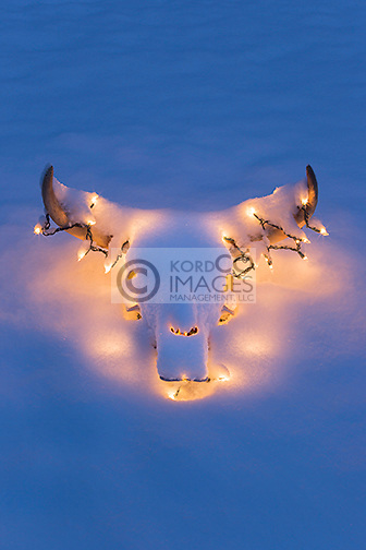 BLEACHED COW STEER SKULL AND HORNS DECORATED WITH WHITE CHRISTMAS LIGHTS UNDER A COATING OF SNOW