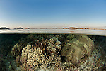 Coral reef in the shallows split level with Komodo island.