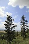 Israel, Lower Galilee, a view of Zippori (Kiryat Ata) Forest