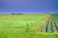 Boundary between Tallgrass Prairie Preserve on left and plowed soybean field on right, Kalsow Prairie State Preserve, Manson, Iowa, AGPix_0506...