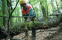 "Europa Deutschland DEU Trittauer Forst .Forstarbeiter mit Schutzkleidung s?gen Eichenholz im Wald -  Forst Forstwirtschaft Wald Waldarbeiter xagndaz | .Europe Germany .forest worker cut oak tree in wood -  log logging saw Stihl  .| [ copyright (c) Joerg Boethling / agenda , Veroeffentlichung nur gegen Honorar und Belegexemplar an / publication only with royalties and copy to:  agenda PG   Rothestr. 66   Germany D-22765 Hamburg   ph. ++49 40 391 907 14   e-mail: boethling@agenda-fototext.de   www.agenda-fototext.de   Bank: Hamburger Sparkasse  BLZ 200 505 50  Kto. 1281 120 178   IBAN: DE96 2005 0550 1281 1201 78   BIC: ""HASPDEHH"" ,  WEITERE MOTIVE ZU DIESEM THEMA SIND VORHANDEN!! MORE PICTURES ON THIS SUBJECT AVAILABLE!! ] [#0,26,121#]"