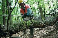 GERMANY, forest worker cut oak tree in wood with chain saw Stihl / DEUTSCHLAND, Trittauer Forst, Forstarbeiter mit Schutzkleidung saegen Eichenholz mit Stihl Kettensaege im Wald