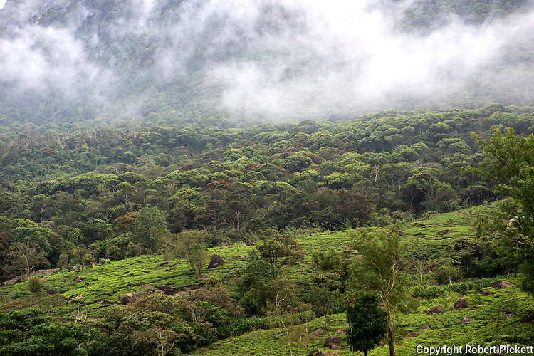 View of farmland and Rainforest, Sabaragamuwa Province, near Sinharaja Forest Reserve, Sri Lanka