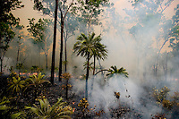 "Fires are set at the beginning of the wet when green is just starting to appear where controlled burns are a big effort in Australia.  They use helicopters that drop incendiary pellets or men with drip lines. A huge number of volunteers to make this happen.  The crew we were with talked about how they wanted to napalm a river from a helicopter to burn out the bamboo for flood control... But then the ""greenies"" got involved."