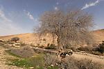 Wadi Eliav in the Negev