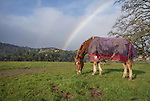 Rainbows, horses, hawks and deer