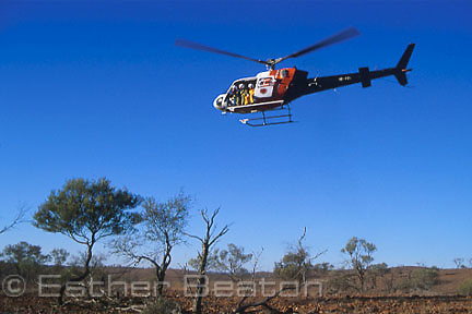 National Parks researchers doing aerial survey of Rock Wallabies from helicopter. Cotaurandee Range, Mutawintji NP,  NSW