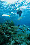 Snorkeler in Hol Chan marine park, Ambergris Caye, Belize