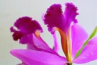 Orquídeas no Orquidário do Jardim Botanico. RJ. Foto de Luciana Whitaker.