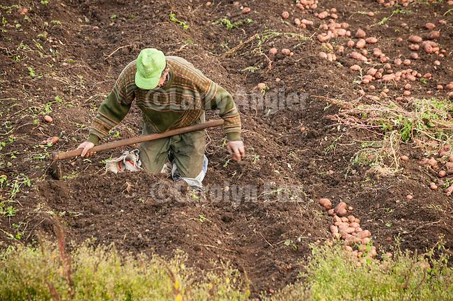Potato harvest in the garden behind Miloje Milinkovic's sister's cabin in Mokra Gora, Serbia