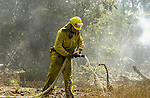August 22, 2001 Coulterville, California  -- Creek Fire –  Firefighter working mop-up on Cuneo Road. The Creek Fire burned 11,500 acres between Highway 49 and Priest-Coulterville Road a few miles north of Coulterville, California.