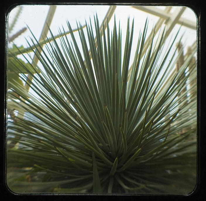 Cactus 2011