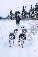 Doglsedding in Bettles, Arctic Alaska.