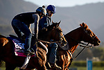 OCT 28: Abscond at Santa Anita Park in Arcadia, California on Oct 28, 2019. Evers/Eclipse Sportswire/Breeders' Cup