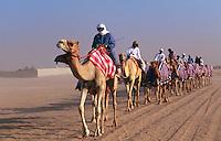Rennkamele beim Training, Dubai, Vereinigte arabische Emirate (VAE, UAE)