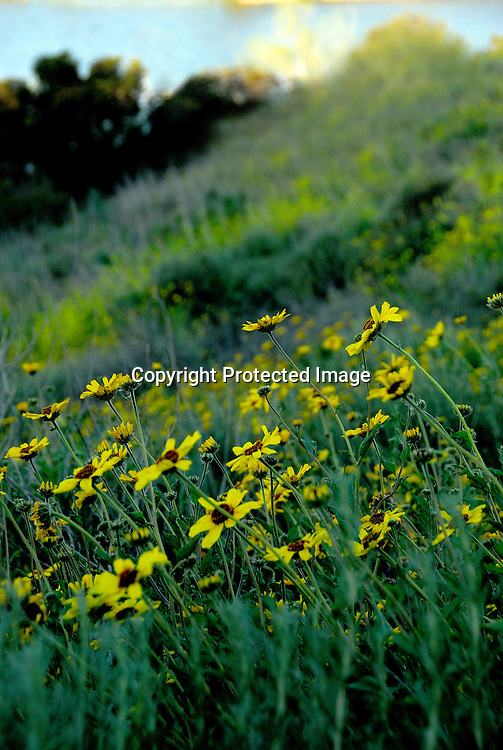 Stock photo field of flowers