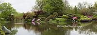 65021-03704 Japanese Garden in spring,  Missouri Botanical Garden, St Louis, MO