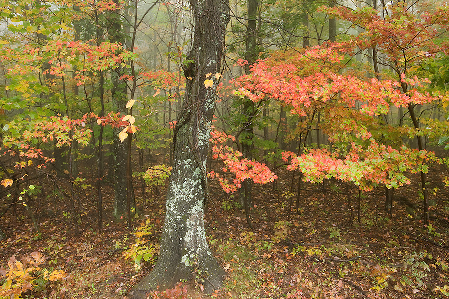 Leaves change colors on the Blue Ridge Parkway.