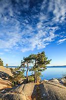 Tallar på klippor vid Gålö i Stockholms skärgård.