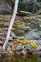 Plant Life on Rocky Canadian Lake Shore