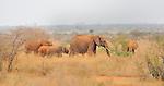 Elephant herd in East Tsavo National Park, Kenya