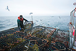 Henry Harris, a resident of Grand Manan and fisherman, stacks lobster traps on the back of the boat. Grand Manan is referred to as the Queen of the Fundy isles and the majority of the industry on the island revolves around the lobster fishery. If the proposed Energy East pipeline is built it will result in a massive increase in the tanker traffic in the Bay of Fundy and increase the risk of a spill that could wipe out the lobster industry and devastate Grand Manan. (Credit: Robert van Waarden - http://alongthepipeline.com)