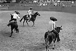 Mexico village fete and rodeo. Charros (horsemen) riding a bull. 1973.