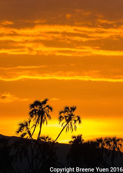 Kenyan Sunrise 2015