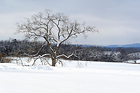 Winter Snow Landscapes