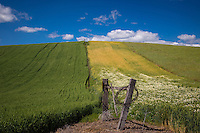 Old Fencepost in the Rolling hills of the Palouse. The Palouse Is a region of where there are no continuous valleys, and the hills do not connect to make long ridges. These hills were not created by rivers and streams, as is most of our landscape, but formed more like sandunes, with winds depositing silt to form of some of the most fertile soil in the country.