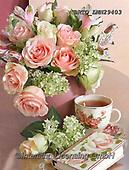 Alfredo, FLOWERS, BLUMEN, FLORES, photos+++++,BRTOLMN29403,#f#, EVERYDAY ,rose,roses