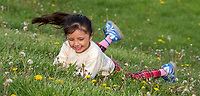 While parents and family watched SMAA baseball at Germain Park, some kids were left to entertain themselves. And rolling down dandelion covered hills was a favourite activity. Here Emma Guadarrama stops midway down the hill to have a quick look at the colourful dandelions decoration the park.