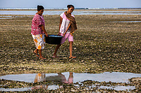 "Women carry a bucket of ""finger fish"" on Gili Air, Indonesia. The fish is shared amongst families and often sold in small amounts as a protein substitute for those who can't afford more expensive fish or chicken."