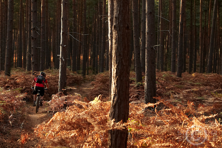 Swinley Forest , Bracknell , Berks    October 2011 pic copyright Steve Behr / Stockfile