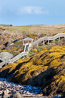 Stairway to beach at Bandon, Oregon with blooming gorse.