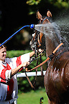 BADEN-BADEN, GERMANY - AUGUST 26: Race Day 2 at the Grosse Woche at Iffezheim Race Track on August 26, 2012 in Baden-Baden, Germany (Photo by Dirk Markgraf)