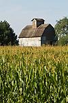 Wood barn with ventilator and corn field, rural NebraskaUSA