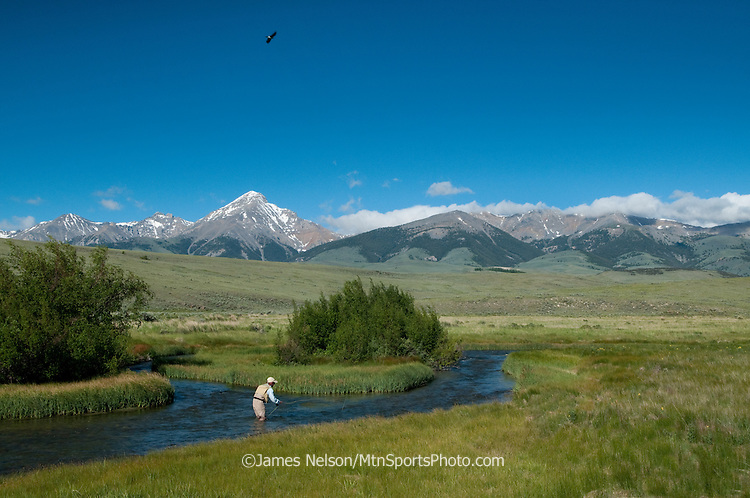 An angler fly fishes for trout on Birch Creek, Idaho, with a hawk flying overhead and the Lemhi Mountains in the background.