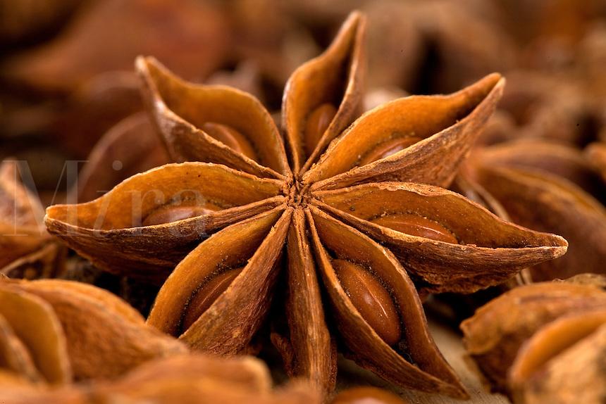 Anise (Star) Illicuim verum close-up
