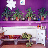 Succulents in terracotta pots interspersed with silver painted containers are displayed on a long open shelf in the vivid purple kitchen