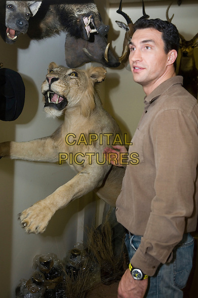 Wladimir Klitschko.Press conference in the newspaper the Moscow member of the Komsomol, Russia..November 23rd, 2006.half length brown shirt side taxidermy stuffed lion animal .CAP/PER/AM.©AM/PersonaStars/CapitalPictures