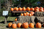 Pumpkins for sale at farm stand