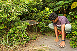 Fishing Cat (Prionailurus viverrinus) biologist, Anya Ratnayaka, camouflaging box trap for collaring in urban wetland, Urban Fishing Cat Project, Diyasaru Park, Colombo, Sri Lanka