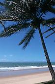 Natal, Northeast Brazil. Idyllic beach with a palm tree.