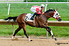 Smash and Grab winning The Nick Shuk Memorial Stakes at Delaware Park on 8/29/2013
