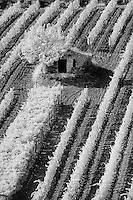 Infra Red Black & White view of small stone barn and hillside vineyard near Montalcino, Italy, Tuscany