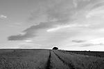 Europa, DEU, Deutschland, Nordrhein Westfalen, NRW, Rheinland, Niederrhein, Toenisberg, Schaephuysener Hoehen, Agrarlandschaft, Himmel, Wolken, Kategorien und Themen, Wetter, Himmel, Wolken, Wolkenkunde, Wetterbeobachtung, Wetterelemente, Wetterlage, Wetterkunde, Witterung, Witterungsbedingungen, Wettererscheinungen, Meteorologie, Bauernregeln, Wettervorhersage, Wolkenfotografie, Wetterphaenomene, Wolkenklassifikation, Wolkenbilder, Wolkenfoto<br /> <br /> [Fuer die Nutzung gelten die jeweils gueltigen Allgemeinen Liefer-und Geschaeftsbedingungen. Nutzung nur gegen Verwendungsmeldung und Nachweis. Download der AGB unter http://www.image-box.com oder werden auf Anfrage zugesendet. Freigabe ist vorher erforderlich. Jede Nutzung des Fotos ist honorarpflichtig gemaess derzeit gueltiger MFM Liste - Kontakt, Uwe Schmid-Fotografie, Duisburg, Tel. (+49).2065.677997, <br /> archiv@image-box.com, www.image-box.com]