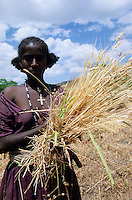 ETHIOPIA, Amhara, Lalibela , orthodox christian woman with cross necklace harvest wheat in highland / AETHIOPIEN, Lalibela, orthodox christliche Frau auf Feld bei Weizenernte im Hochland von Amhara