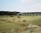 Rogalin 22.09.2014  Poland <br /> Horses near Warta River. <br /> Photo: Michal Adamski / Napo Mentor<br /> <br /> Konie na terenach zalewowych rzeki Warty.<br /> Photo: Michal Adamski / Napo Mentor