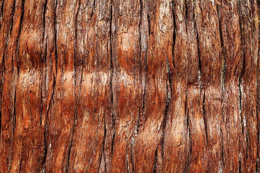 Bark of western red cedar, Grove of the Patriarchs, Mount Rainier National Park, Washington, USA